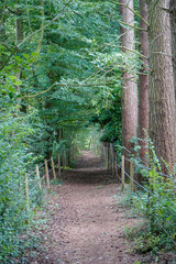 Wall Murals Road in forest Woodland path covered by tree branches