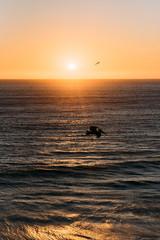 Pelikane im Abendlicht an der Küste von Kalifornien