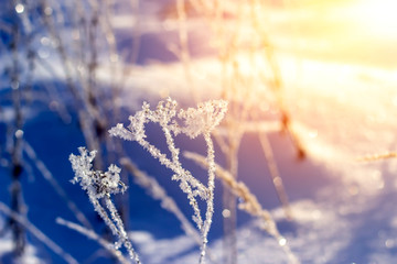 Winter landscape grass in frost on a snowy field at sunrise. Christmas background.