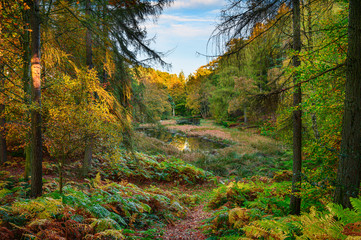 The Tarn in Morralee Wood at Allen Banks, and Staward Gorge in the English county of Northumberland which was a Victorian garden in a gorge of the River Allen cutting through woodland