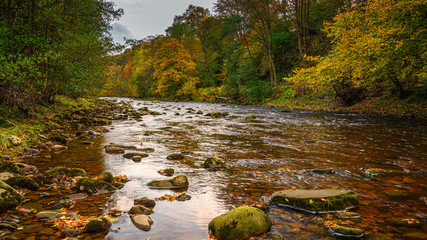 The River Allen flows through Allen Banks, and Staward Gorge in the English county of Northumberland which was a Victorian garden in a gorge of the River Allen cutting through woodland