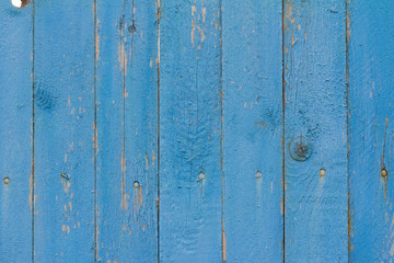 blue wooden background, a fragment of an old wooden fence with cracks, nails and peeling paint