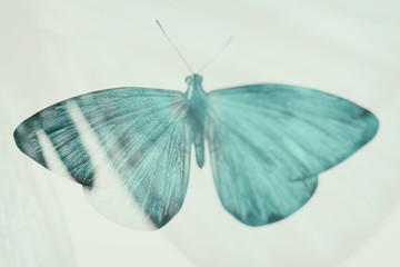 color tropical butterfly. blurred image.