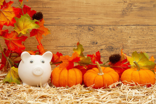 Fall savings with piggy bank and pumpkins and fall leaves on straw hay with weathered  wood