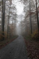 Acrylic Prints Nature Waldweg im Herbst