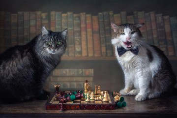 Two cats playing chess in the library