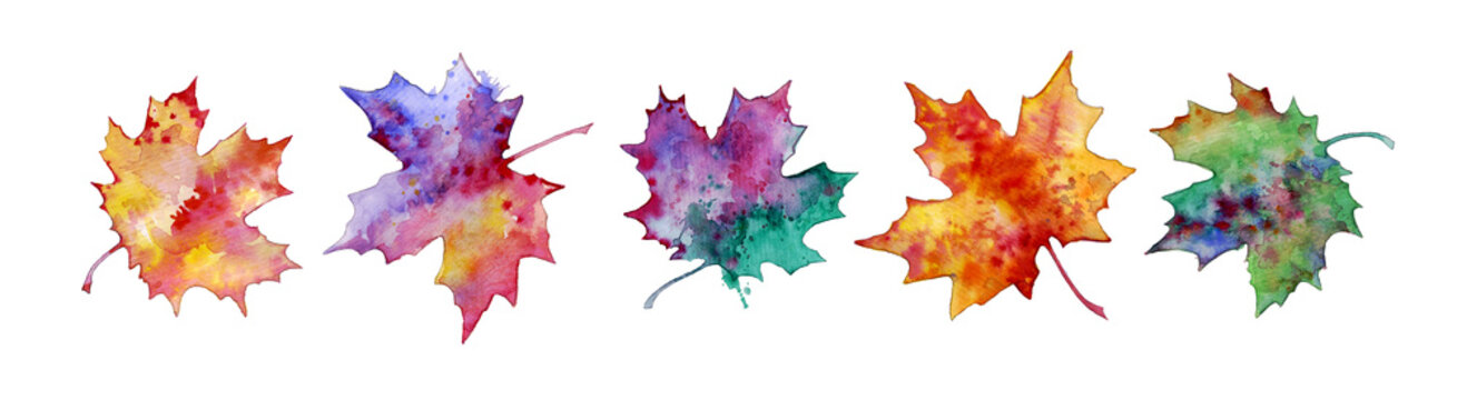 Colorful maple leaves, set of plant elements for design, watercolor illustration. Autumn leave. Leaves isolated on a white background.