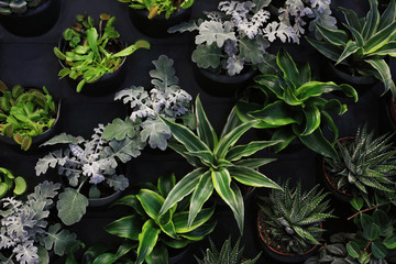 Vertical Garden Plant Wall, Beautiful floral background, succulents, Home decoration