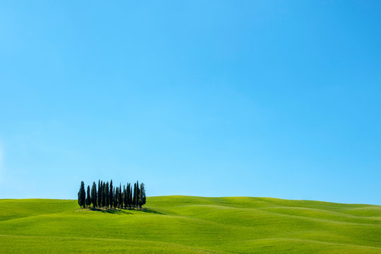 Cypress trees on Tuscan landscape against clear sky