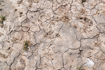desert dried and cracked ground. Erosion earth background. Cracked dry wall surface. White natural cracked texture deşer