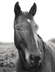 portrait of horse in field on farm in upstate NY