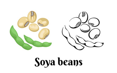 Soya beans isolated on white background. Vector color illustration of legumes in cartoon flat style and black and white outline. Icon.