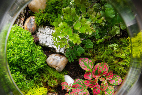 Ecosystem Forest in Jar. Modern Interior Decor