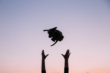 Cute pictures of happy dachshund puppy in the air, outdoors.