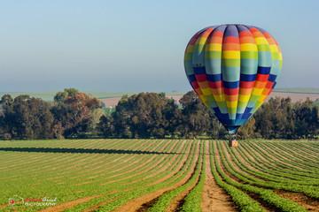 Poster Ballon hot air balloon over the fields