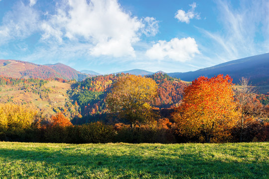 beautiful afternoon autumn scenery in mountains. sunny weather gorgeous sky. amazing nature background with trees in colorful foliage on the green grassy meadow