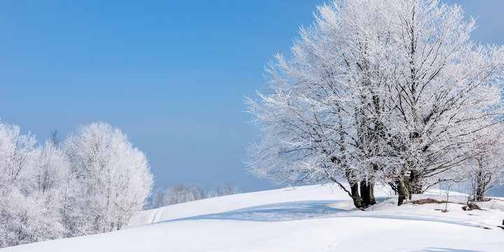 tees in hoarfrost on a snow covered meadow. fantastic winter panorama on a misty morning weather with blue sky. minimalism concept in fairy tale landscape
