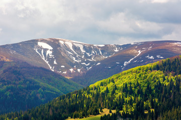 mountain hymba view in springtime. part of borzhava ridge of ukrainian carpathians located in transcarpathia. summit with spots of snow. forest in green foliage. sunny weather with clouds on the sky