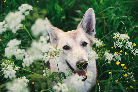 Adorable Shepherd dog sitting in tall grass