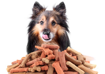 Sheltie and dog biscuits