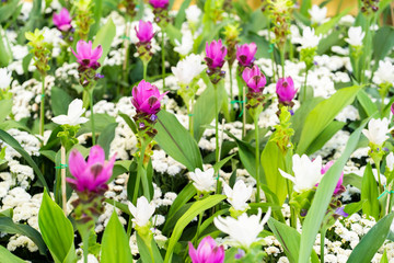 Pink and white flower garden landscape