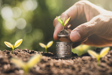 The coins are stacked on the ground and the seedlings are growing on top, the concept of saving money and financial growth.