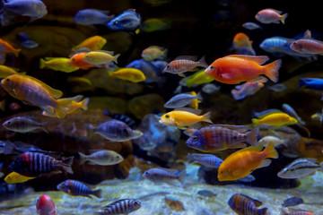 Colorful marine life in large aquarium  Wall mural