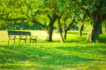park bench blur bokeh background