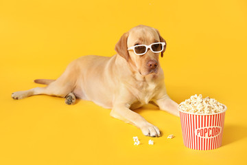 Adorable dog with bucket of popcorn and 3d glasses on color background