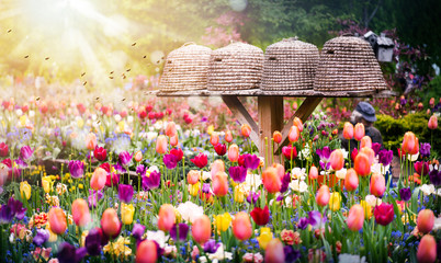 Bee hives or houses in beautiful tulips garden. Close up of flying bees and sun light background.