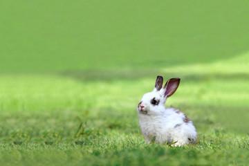 草原の中の1匹の子ウサギ