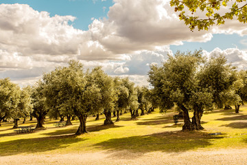 landscape of an olive tree hood in spain with tables for picnics and clouded sky