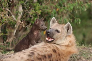 Keuken foto achterwand Hyena Spotted hyena mom and cub.