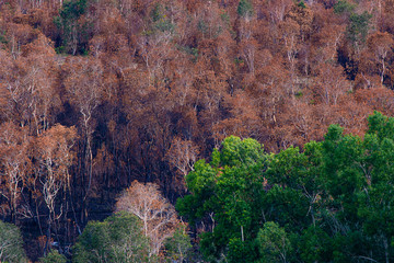 The picture between the burnt tree and the green tree.Swamp Forest was Burning