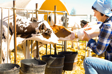 mature woman taking care of dairy herd in livestock farm