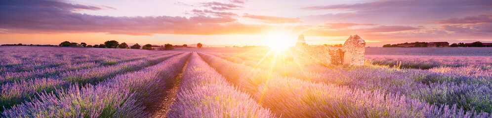 Spoed Fotobehang Landschap LAVENDER IN SOUTH OF FRANCE