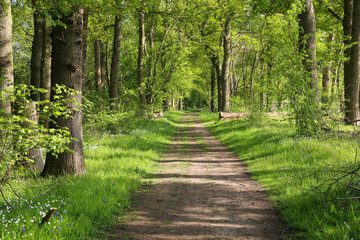 Papiers peints Route dans la forêt Beautiful path though an ancient woodland or forest outside Guildford, Surrey. UK