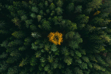 Autumn forest aerial view. Colorful trees from above. Fall scene.