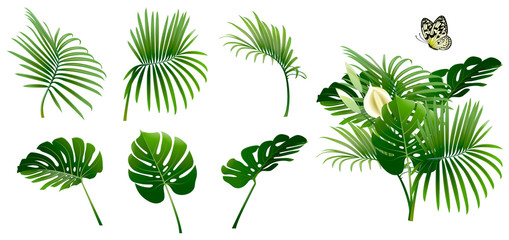 Set of Branches of Tropical Plants