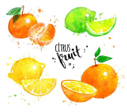 Watercolor set of citrus fruit
