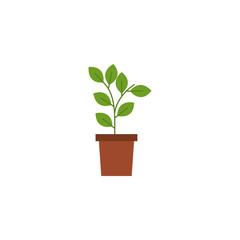 Isolated plant inside pot flat design