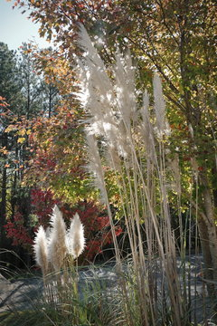 Beautiful Landscaping on a Sunny Autumn Day