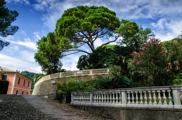 View of Zoagli with pine tree. Zoagli is small town in the province of Liguria, Italy