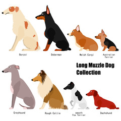 long muzzle dog collection