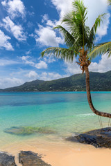 Fototapete - Coconut palm trees on tropical island and turquoise sea. Summer vacation and tropical beach concept.