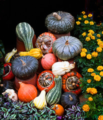 A colourful display of autumn coloured vegetables, including marrow and pumpkin against a plain black background