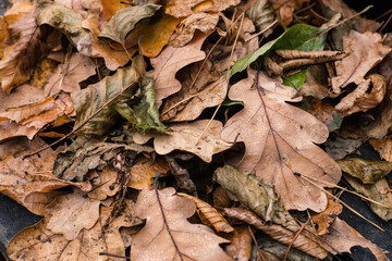 Close up autumn leaves in a forest