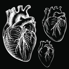 Sketch Ink Human heart. Engraved Anatomical heart illustration. Background black.