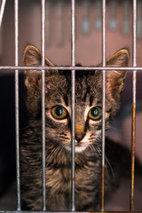 sad kitten in the cage at the veterinary clinic