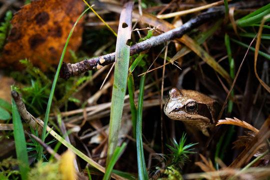 Hello little froggy